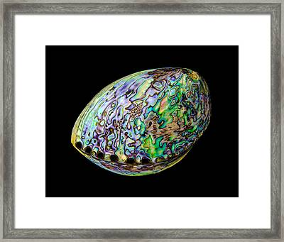 Abalone Shell Framed Print by Jim Hughes