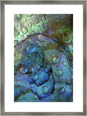 Abalone Shell With Water Drops Framed Print