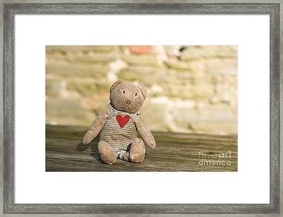 Abandoned Bear Framed Print