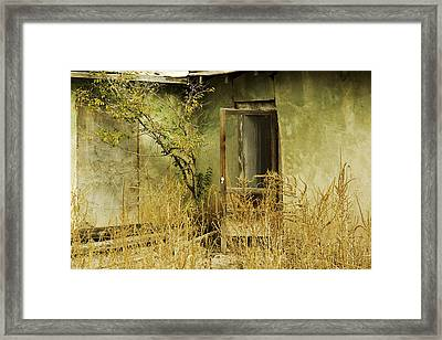 Abandoned Green House-002 Framed Print by David Allen Pierson