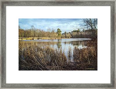 Abbott's Pond Cattails Framed Print by Brian Wallace