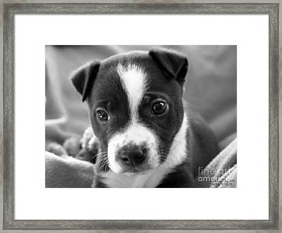 Abby The Rescued Dog Framed Print by Deborah Fay