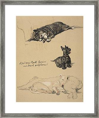 Aberdeens, Bull Terrier And Irish Framed Print by Cecil Charles Windsor Aldin
