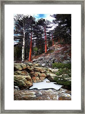 Abert's Squirrel Framed Print by Ric Soulen