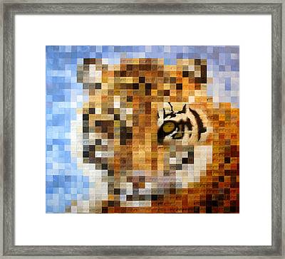About 400 Sumatran Tigers Acrylic On Paper Framed Print by Charlie Baird