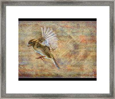 About To Land Framed Print by Jim Wright