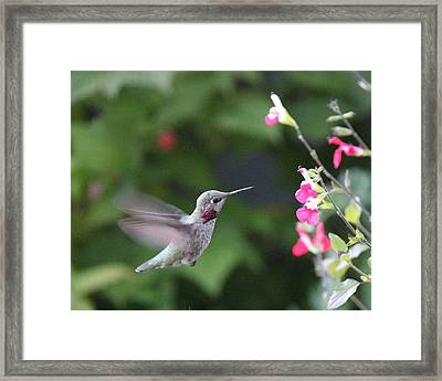 About To Sip Framed Print by Marv Russell