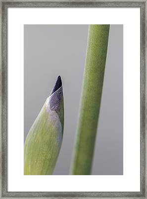 About To Unfurl Framed Print
