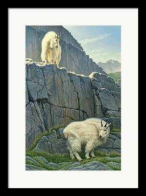 Mountain Goat Paintings Framed Prints