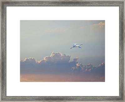Above It All Framed Print by Adele Moscaritolo