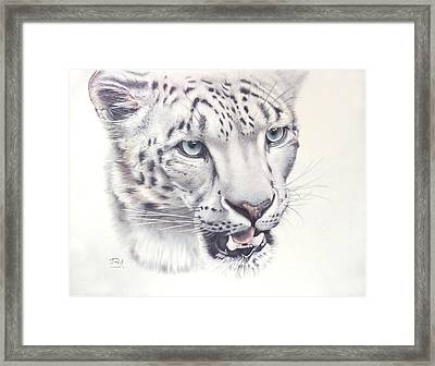 Above The Clouds - Snow Leopard Framed Print