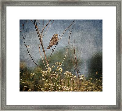 Above The Prairie Framed Print by Dale Kincaid