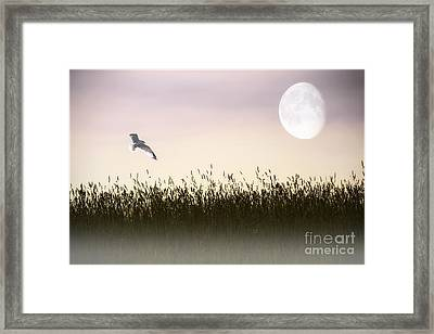 Above The Tall Grass Framed Print by Tom York Images