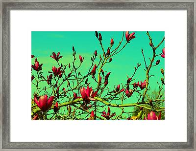 Above The Tree Framed Print