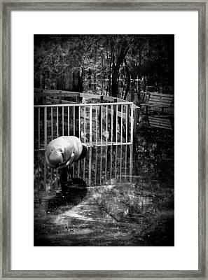 Above The Water Framed Print by Sheri McLeroy