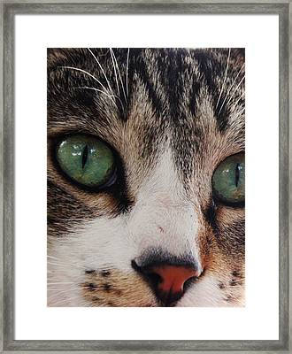 Absolute Honesty Framed Print