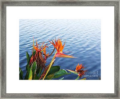 Absolutely Wonderful In Every Way Framed Print by E Luiza Picciano