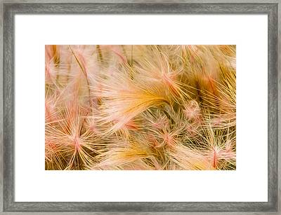 Abstract 1 Framed Print by Celso Bressan