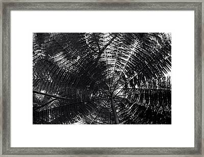 Framed Print featuring the photograph Abstract by Amarildo Correa