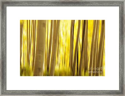 Abstract Aspens Framed Print by Juli Scalzi