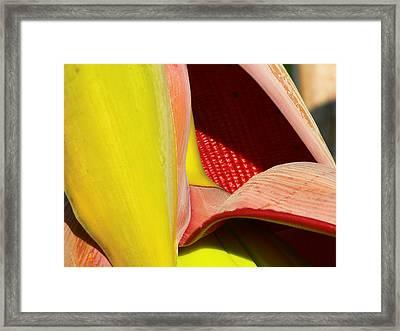 Abstract Banana Bloom Framed Print