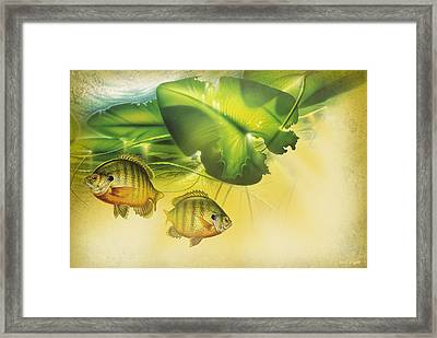 Abstract Blugill Framed Print
