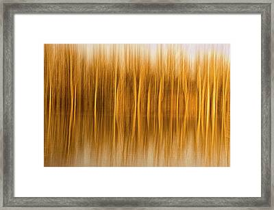 Abstract, Blur Of Trees And Reflections Framed Print by Rona Schwarz