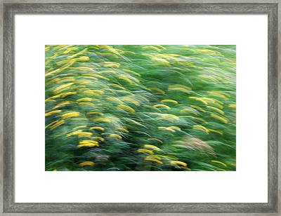 Abstract Blurred Flower Meadow In Spring Framed Print