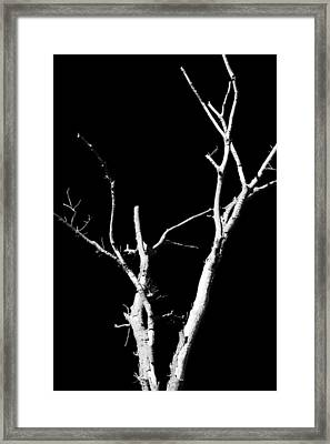 Abstract Branches Framed Print by Maggy Marsh