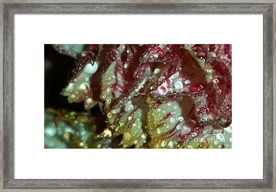 Abstract Carnation Framed Print