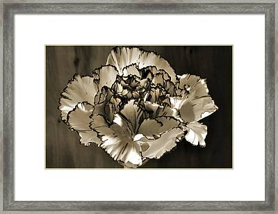 Abstract Carnation Framed Print by Terence Davis