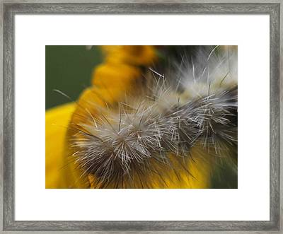 Abstract Caterpillar Framed Print