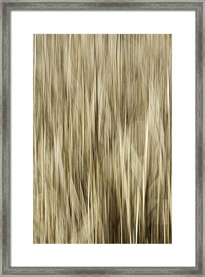 Abstract Cattails Framed Print by Thomas Young