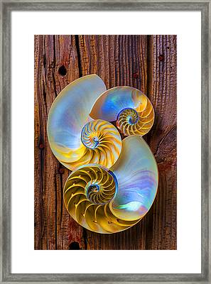 Abstract Chambered Nautilus Framed Print