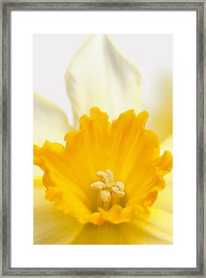 Abstract Daffodil Framed Print