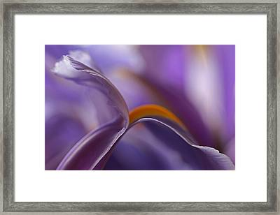 Abstract Flowers Framed Print by Juergen Roth