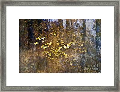 Abstract Forest Framed Print by Yuri Santin
