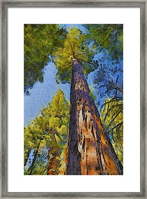 Abstract Giant Sequoia Framed Print by Barbara Snyder