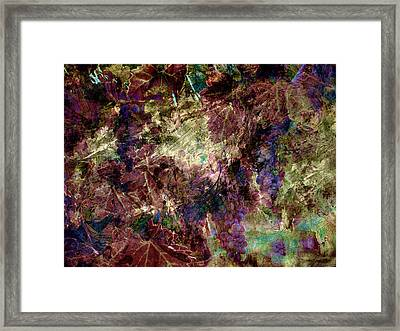 Framed Print featuring the photograph Abstract Grapes On Vine Number Four by Bob Coates