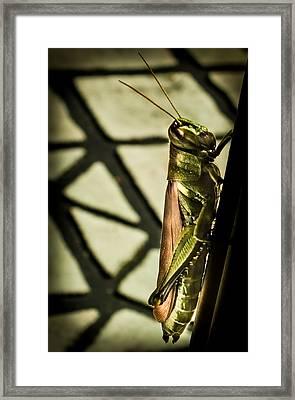 Abstract Grasshopper Framed Print by Karen Wiles