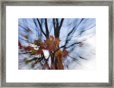Abstract Impressions Of Fall - Maple Leaves And Bare Branches Framed Print by Georgia Mizuleva