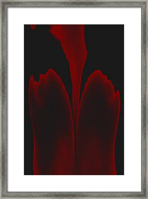 Abstract In Bloom 3 Framed Print