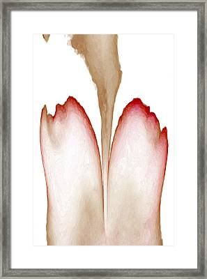 Abstract In Bloom 4 Framed Print