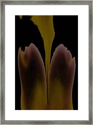 Abstract In Bloom Framed Print