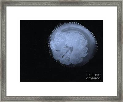 Framed Print featuring the photograph Abstract Jelly by Brigitte Emme