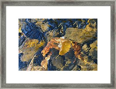 Abstract Leaves In Water Framed Print by Dan Friend