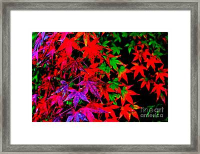 Abstract Leaves Framed Print by Jay Nodianos