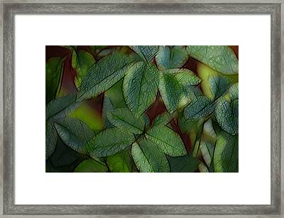 Abstract Leaves Framed Print by Ronald T Williams