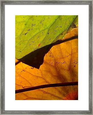 Abstract Lillypad Framed Print