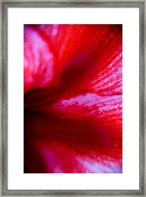 Abstract Lily Framed Print by Kim Lagerhem